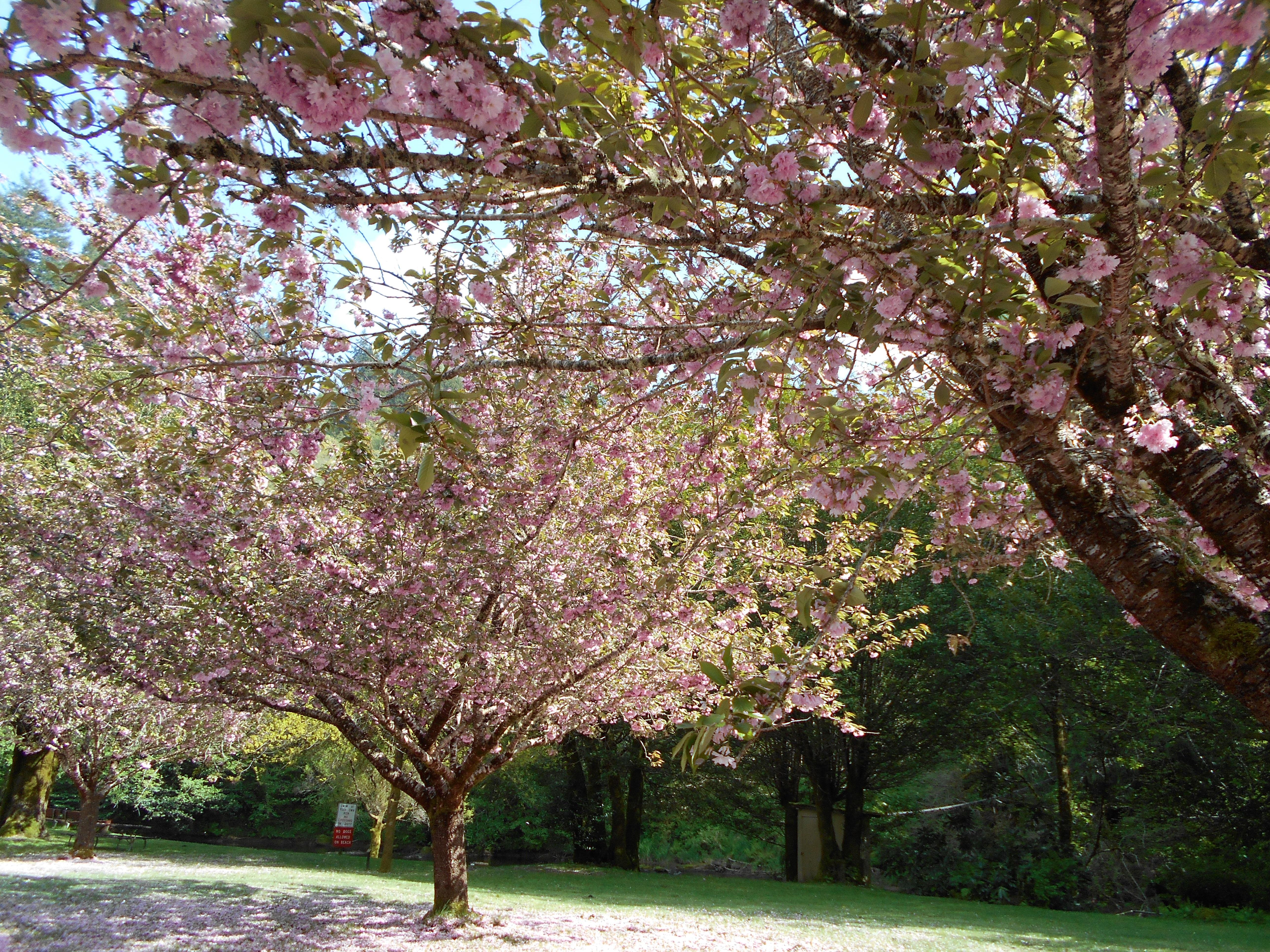 Lavern Park